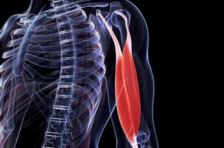 Sistema Muscular y el Esqueleto